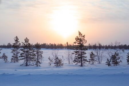 winter dawn in the tundra