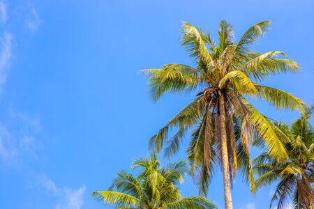 palm trees against blue sky, summer background of tropical island