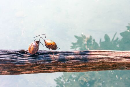 two iron beetles on a log, the concept of struggle and competition, a demonstration of strength and advantage