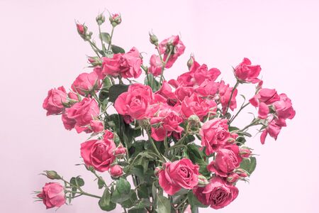 a bouquet of pastel pink roses on a light background, a template for postcards, fabrics, wallpapers 免版税图像