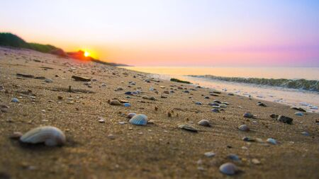 on a sandy surface on the seashore lie seashells, in the background a beautiful sunset