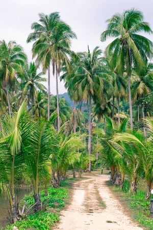 tropical forest path, palm trees and mountains, Koh Chang island in Thailand, travel and tourism in Asia