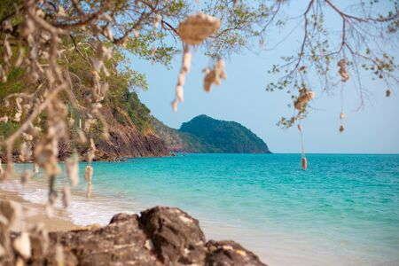 wish tree with hanging corals on the background of the azure sea, travel and tourism in Asia, sea holidays, fulfillment of dreams