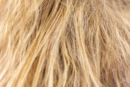 background of untidy, tough, blond hair of a woman without care