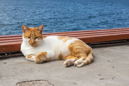 on the seafront there is a resting white-red cat basking in the sun