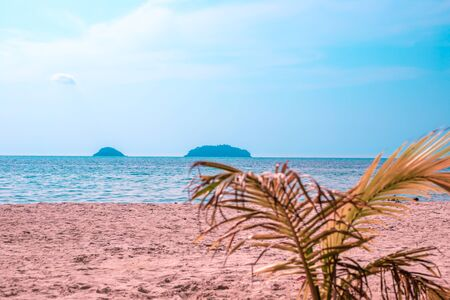sandy seashore with a young palm tree, summer vacation in the tropics, empty beach