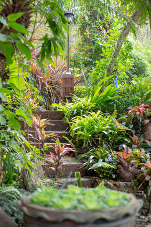 landscaping and garden decoration, natural stone steps, beautiful plants
