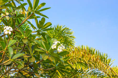 tropical flowers and palm trees against a blue sky 版權商用圖片 - 157337631