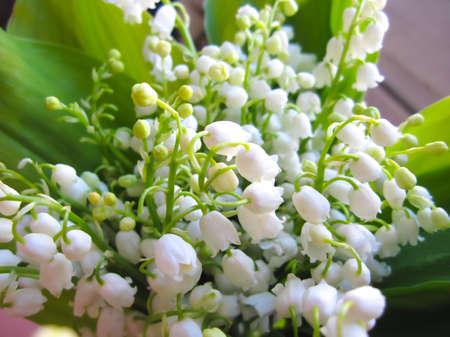 春天白花百合花的花束,祝贺假日,母亲节,妇女节。