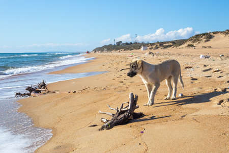 The dog walks along the sandy seashore, where the debris is taken out by the wave. Harm to the ecosystem of the earth.