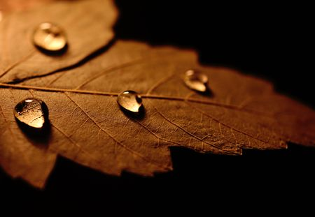 A background of water drops on a leaf