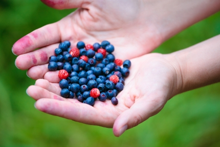 Woman hands holding ripe berries  photo
