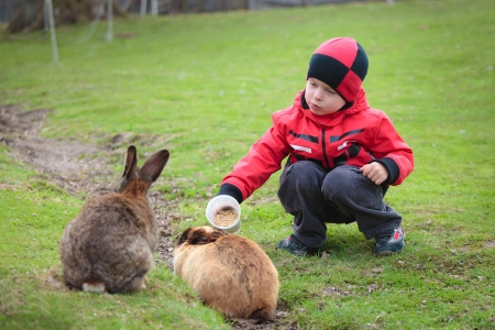 Little boy feed a rabbit