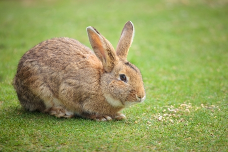 Easter rabbit on fresh green grass  photo