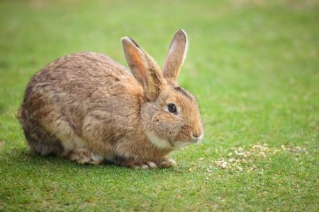 Easter rabbit on fresh green grass Stock Photo - 13697047