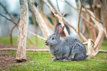 Easter rabbit on fresh green grass  Stock Photo