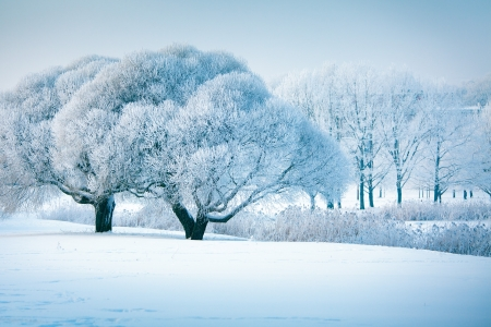 Frozen winter trees in Latvia, christmas time photo