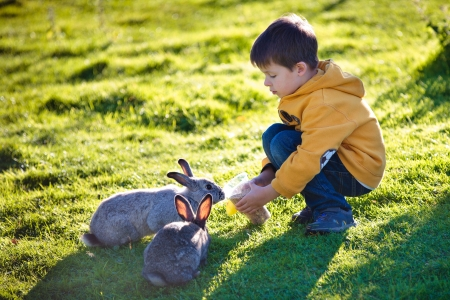 Little boy feeding two rabbits in farm on beautiful sunny day