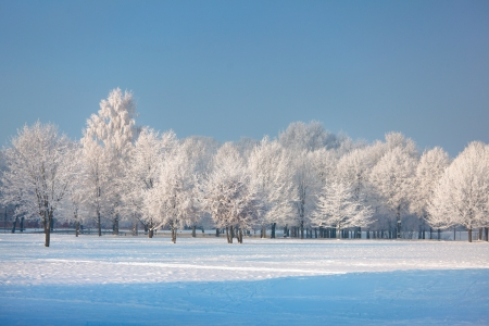 rural scenes: Winter trees on beautiful winter day Stock Photo