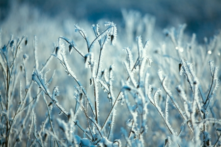 scandinavian christmas: Hoarfrost on branches of bushes Stock Photo