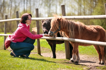 Young attractive woman feeding two ponies in farm Stock Photo