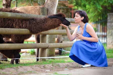 Young attractive woman feeding a lama in farm Stock Photo - 18263247