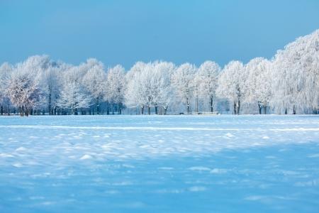winter trees: Winter trees