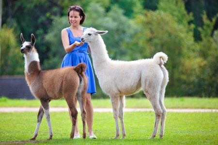 Young attractive woman feeding two lamas Stock Photo