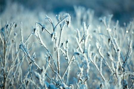 blizzard: Hoarfrost on branches of bushes Stock Photo