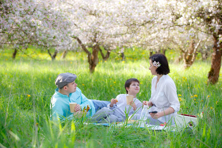 Young family picnicking in blooming apple garden on beautiful spring day photo