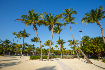 Tropical resort with coconut palms on sandy beach, Key West, Florida, USA