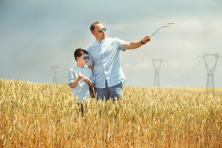 wheatfield: Happy father with little son walking happily in wheat field on warm and sunny summer day