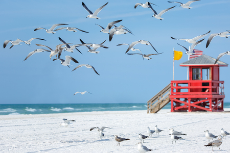 Red wooden lifeguard hut and flying seagulls on an empty morning beach
