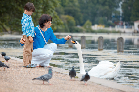 Young mother and her little son feeding swans at the lake