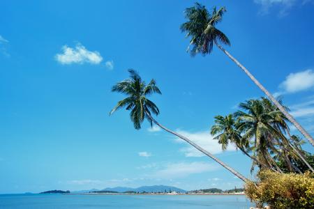 Coconut palms at Bo Phut coastline, Koh Samui, Suratthani, Thailand