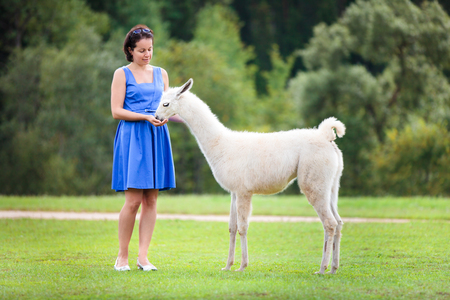 Young attractive woman feeding baby lama outdoors Stock Photo