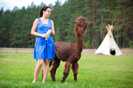 Young attractive woman feeding brown alpaca on farm