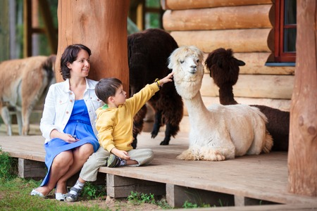 Cute little boy and his mother playing with a baby alpaca on farm Stock Photo