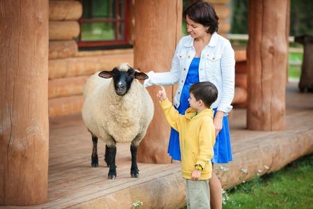 ovejitas: Mujer joven y su pequeño hijo mirando una oveja en la granja
