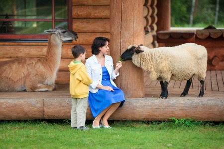 Young woman and her little son feeding a sheep on farm
