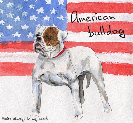 Postcard American Bulldog Stock Photo