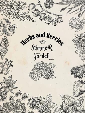 Herbs and berries food set illustration Illustration