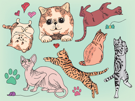 jump for joy: beautiful set of different playing cats and kittens Illustration