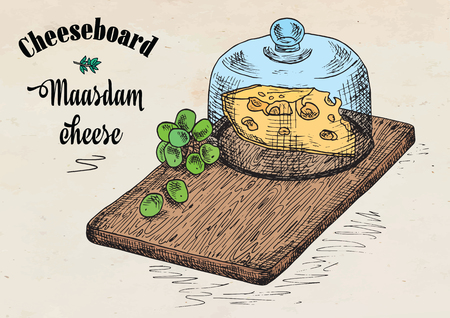 Hand drawing illustration of chopping board with grapes and cheese. Maasdam cheese board. Illustration