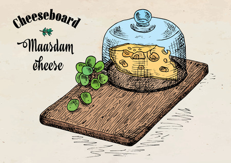 Hand drawing illustration of chopping board with grapes and cheese. Cheese board. Illustration