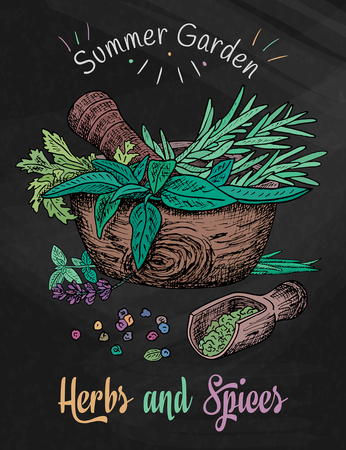 tarragon: Beautiful hand drawing healthy herbs and spices mortar. Herbs, basil, chervil on the chalkboard background Illustration