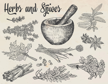 Beautiful hand drawing healthy herbs and spices mortar. Herbs, basil, chervil. Banco de Imagens - 81439394