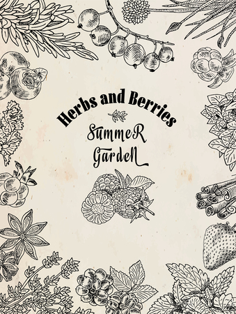 Herbs and berries summer garden, dewberry, blueberry, raspberry, strawberry, blueberry, cloud berry, herbs, basil, chives, coriander, oregano, rosemary, thyme Illustration
