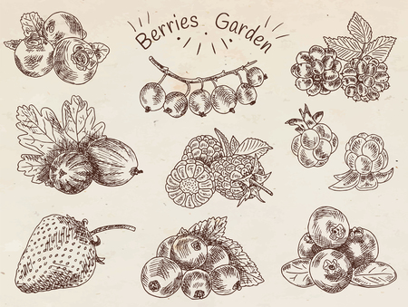Set of berries illustration.