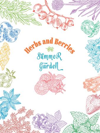 Herbs and berries summer garden, dewberry, blueberry, raspberry, strawberry, blueberry, cloud berry, herbs, basil, chives, coriander, oregano, rosemary, thyme Stock Vector - 89491455